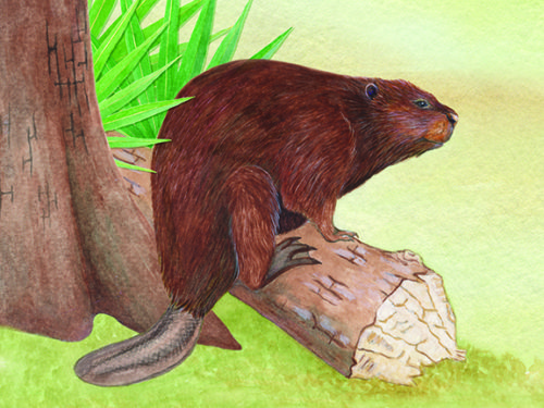 web_bpa-beaver