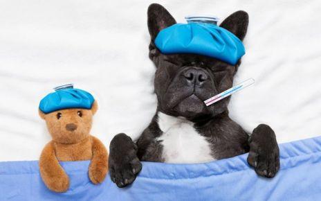94836898 sickdog - Dogs on Viagra?