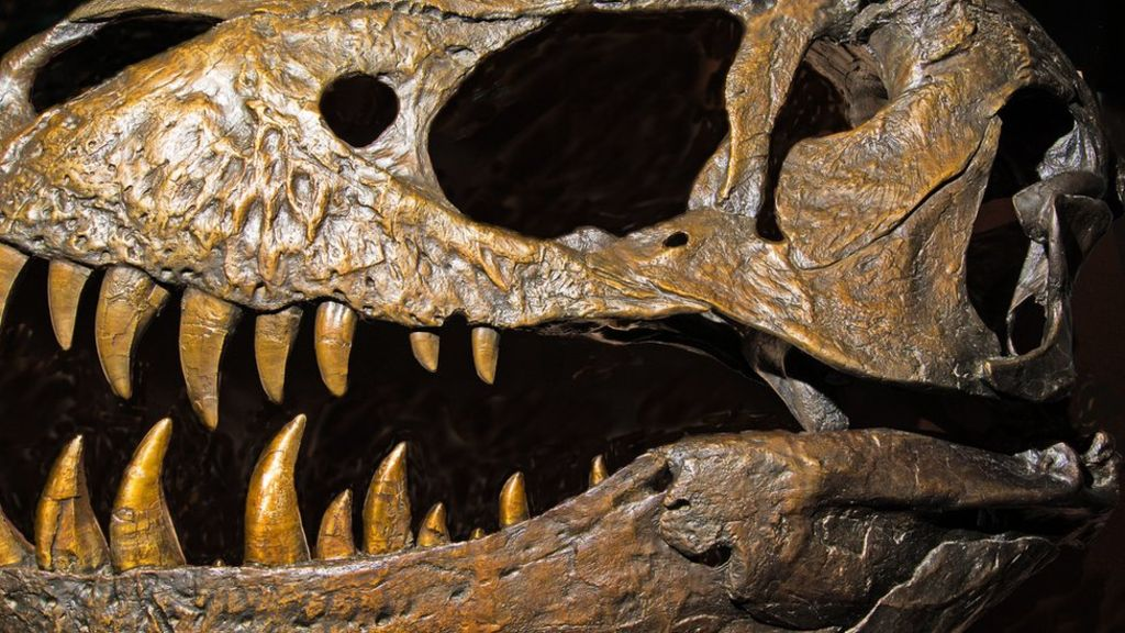 95207159 tyrannosaurus rex dinosaur skull spl - Major shake-up suggests dinosaurs may have 'UK origin'