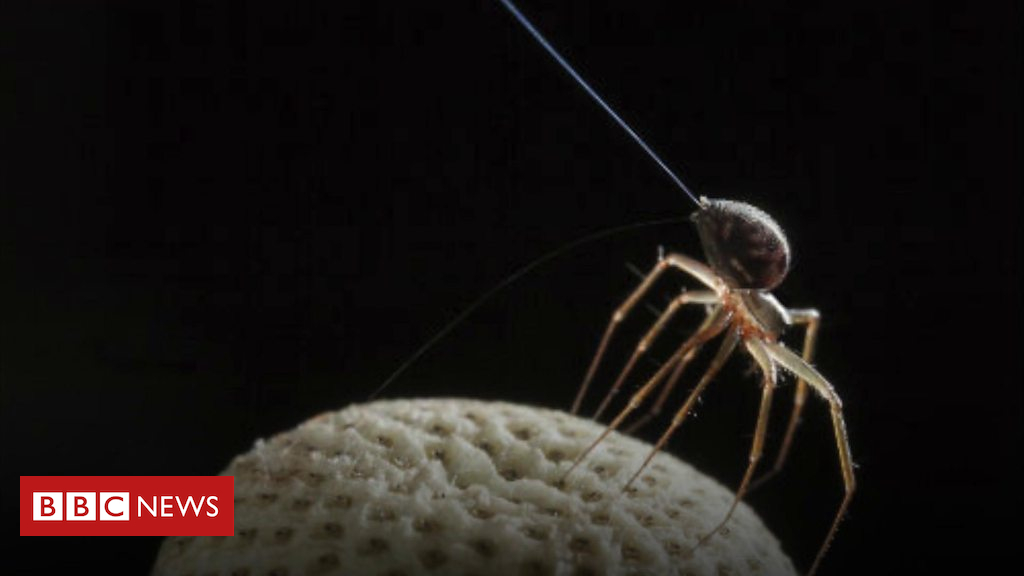 102413700 p06d1gp9 - Bristol University discovers how wingless spiders fly