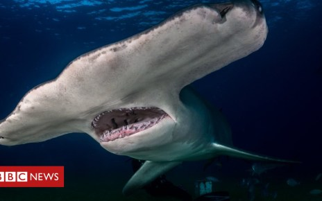 102564847 gettyimages 946921072 - The new sharks coming to UK waters