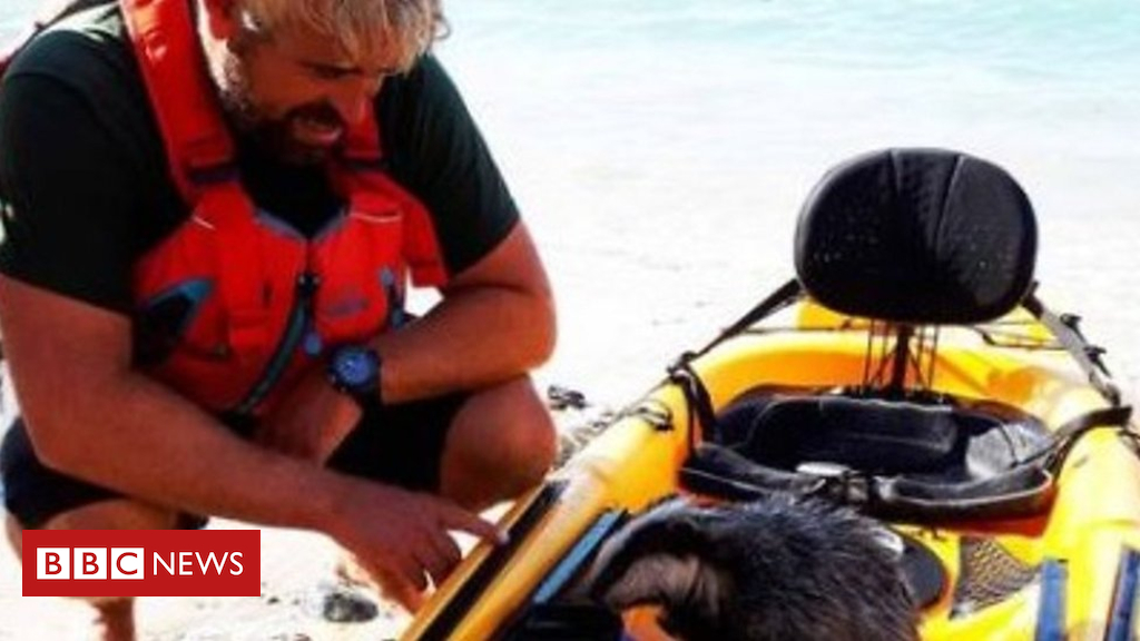 102688605 p06fpxc1 - Kayaker rescues badger he found in the sea off Cornwall coast