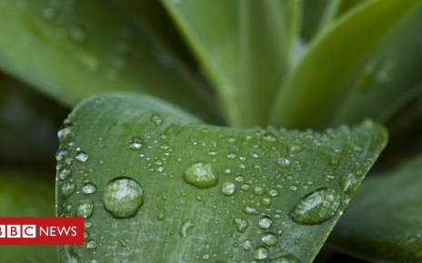 102720655 c0064138 agave with raindrops spl - Petrichor: why does rain smell so good?