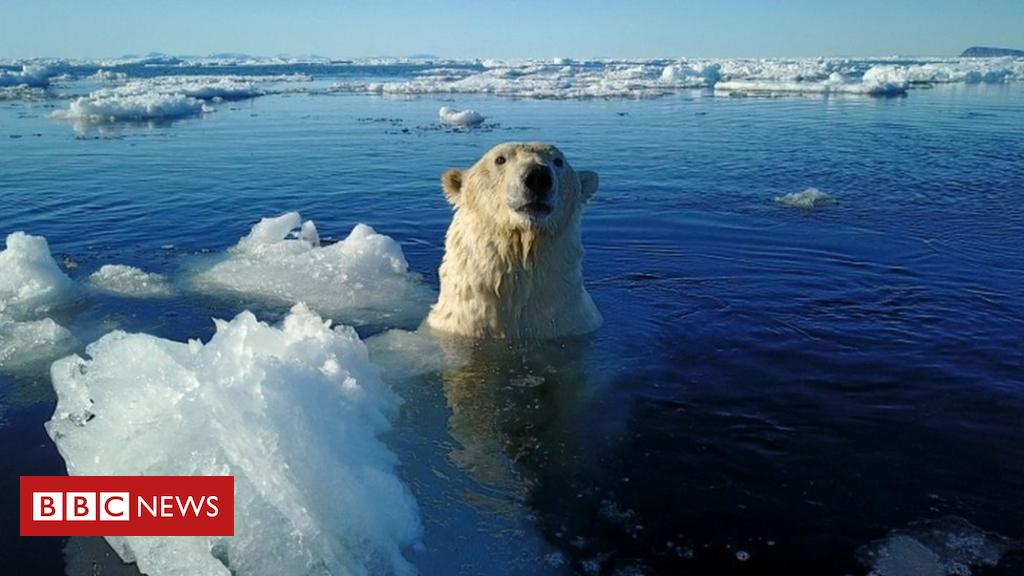 102745587 polarbear2 - Polar bear shot dead after attacking cruise ship guard
