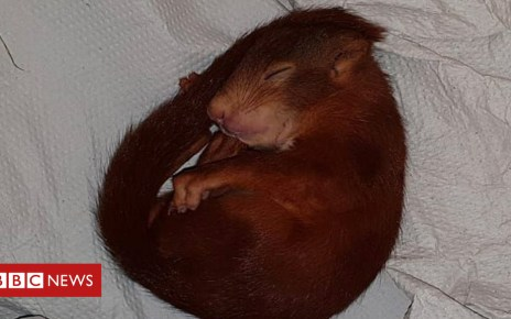 102925908 048599006 - German police save man from baby squirrel terror