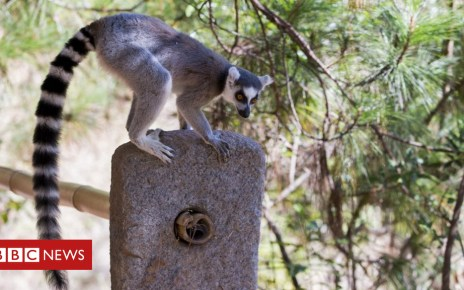 103102270 gettyimages 826110432 - New perspective on how lemurs got to Madagascar