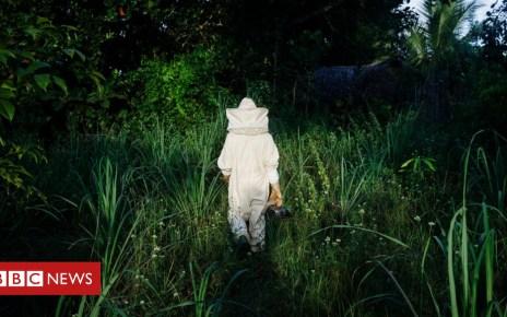 103108927 1ec25715 a36b 4530 8300 25e3833bf7fe - The forest beekeepers of Zanzibar