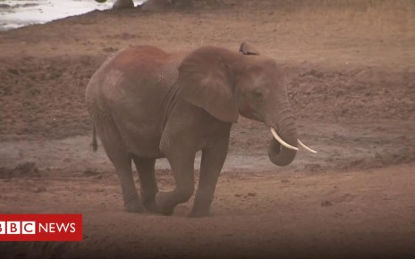 103176400 p06jd5p6 - Elephant repellent invented at a Kenyan school that warns by SMS