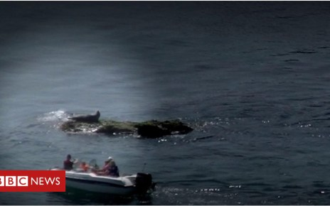 103229742 p06jtlzl - Seal tourists 'risk being bitten', researchers warn