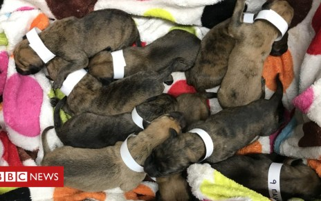 103354639 puppies - Litter of 10 puppies found in layby near Southampton