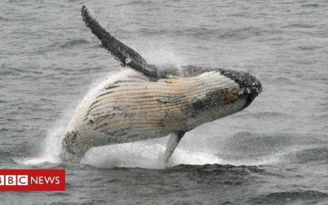 103419817 049213601 - Brazil meeting votes to protect world's whale population