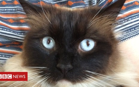 87174178 87174177 - Cat killer mystery solved, but how do we keep our pets safe?
