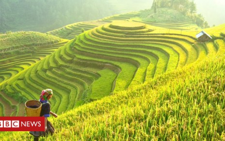 103824243 gettyimages 694050758 - Rice 'safely conserved' in Philippines gene bank