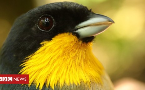 104086724 peru2 - Climate change is 'escalator to extinction' for mountain birds