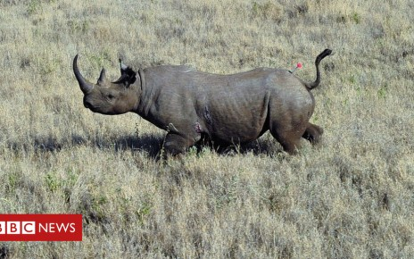 104094637 gettyimages 178264890 - Rhino horn: Alarm as China eases 25-year ban on rhino and tiger parts