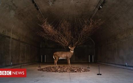 104225376 30573810938 f10289a38b k - How an eerie abandoned US base near North Korea turned into an art haven