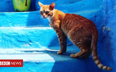 104276455 cat2 - Briton dies from rabies after cat bite in Morocco