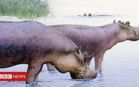 104452597 c0375136 hippopotamus gorgops illustration spl - Humans 'off the hook' for African mammal extinction