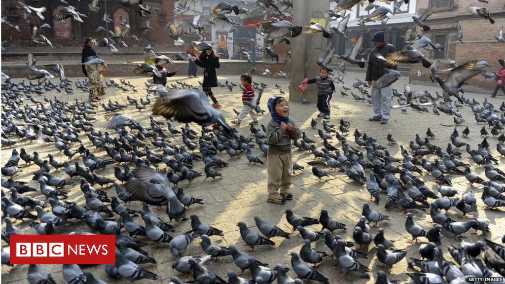 104613338 gettyimages 461496547 - Rats and pigeons 'replace iconic species'