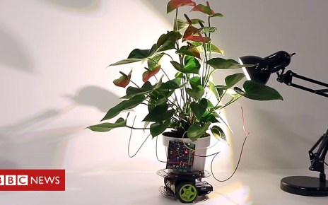 104678151 p06tvxvl - Cyber-plant drives towards light - and other tech news