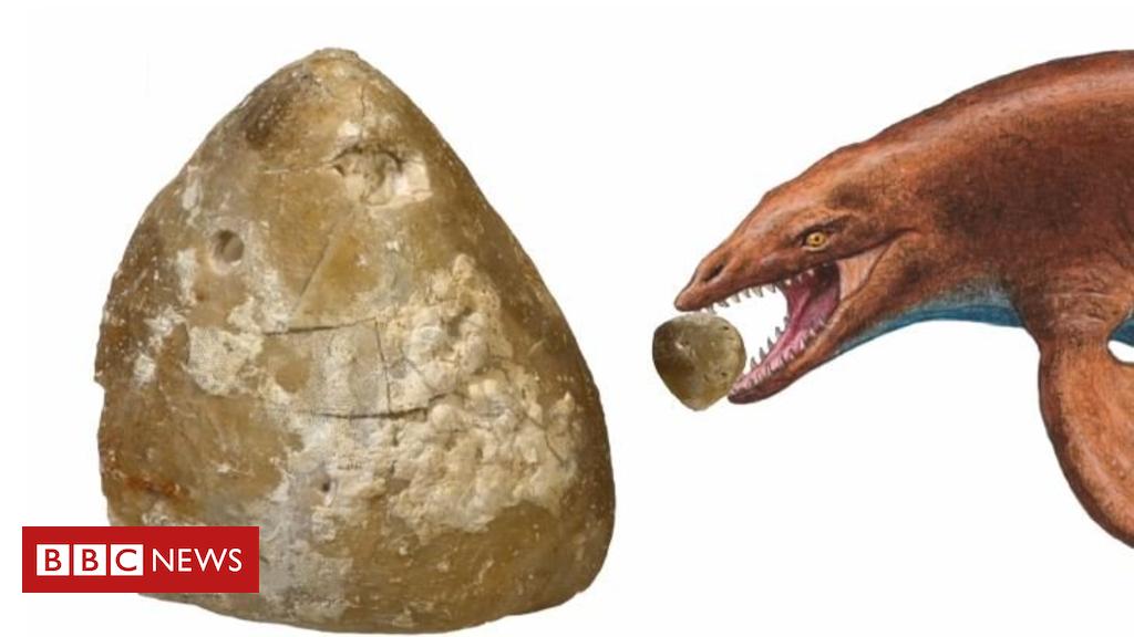 104722485 urchin2 - Danish sea urchin fossil reveals ancient drama