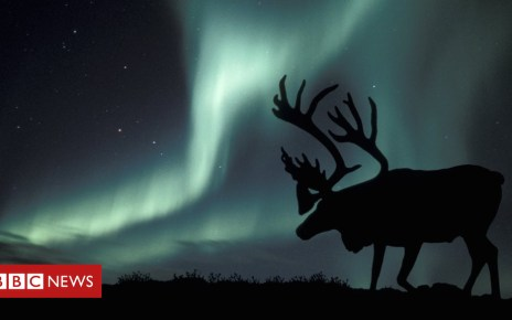 104742847 e1150386 aurora borealis and caribou spl - Climate change: Arctic reindeer numbers crash by half