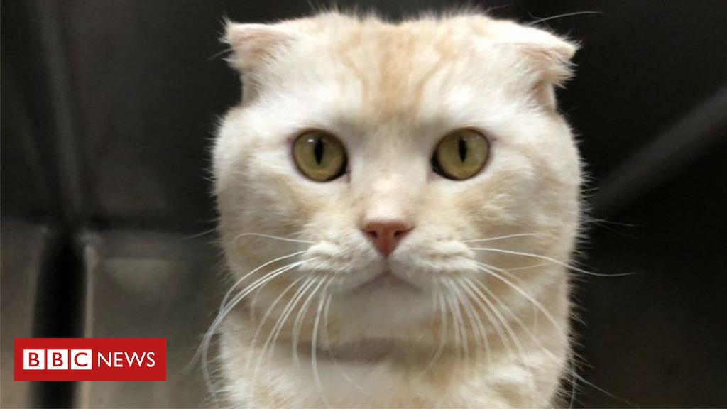 105146718 5863ef39 d393 4fe4 808a c2e9b4e4f2b8 - Taiwan man fined for sending cat in post