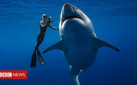 105225133 051701037 - Swimming with sharks