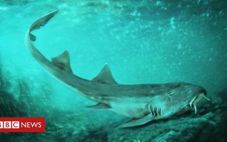 105283051 mediaitem105283050 - Fossil shark named after 80s video game