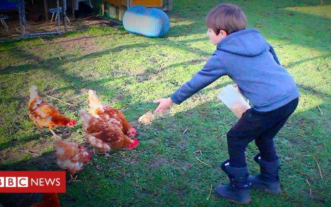 105339403 p06z2pdb - Chicken therapy helps 'to calm' autistic children