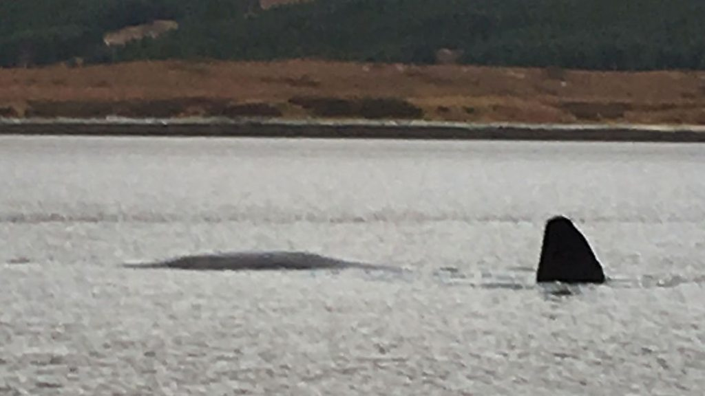 p06x3fvn - Rescuers search Loch Eriboll for 'distressed whale'