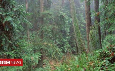 105622419 treeswood - China and India help make planet leafier