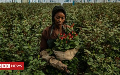 105856174 gettyimages 1129335869 - Brexit: Will it affect the Kenyan flower trade?