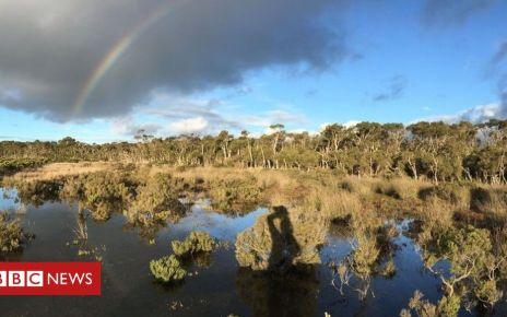 105915960 mediaitem105915959 - Wetland mud is 'secret weapon' against climate change