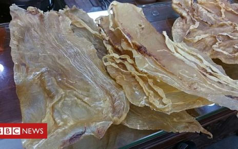 105930173 gettyimages 943987596 1 - China accuses 11 of smuggling totoaba swim fish bladder