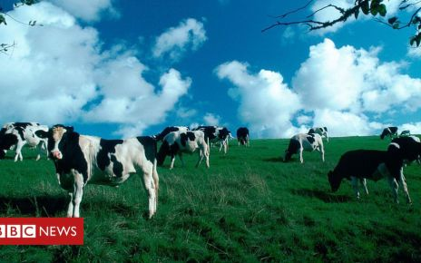 105947853 gettyimages 53043337 - Climate change: Pledge to cut emissions from dairy farms