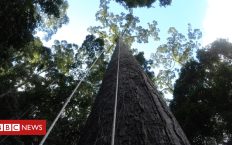 106317109 190404 ground - UK scientists discover world's tallest tropical tree
