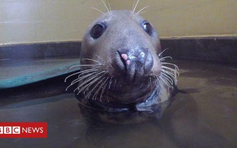 106422976 p0769hkg - Plastic ring injury leaves Horsey seal Sir David 'weak'
