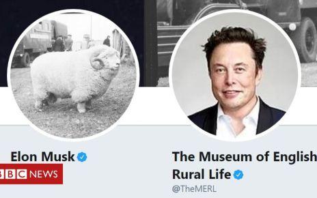 106500851 c9f7f9b0 404e 4c20 b2e1 68645a4e8549 - Tesla 'hires' witty museum sheep tweeter