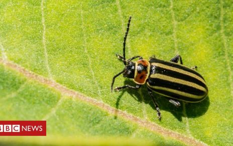 106773270 gettyimages 976736802 - Five things we've learned from nature crisis study