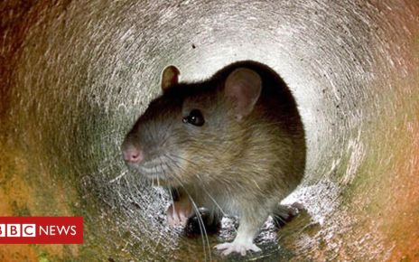 107006101 hi017745778 - Compassionate conservation is 'seriously flawed'