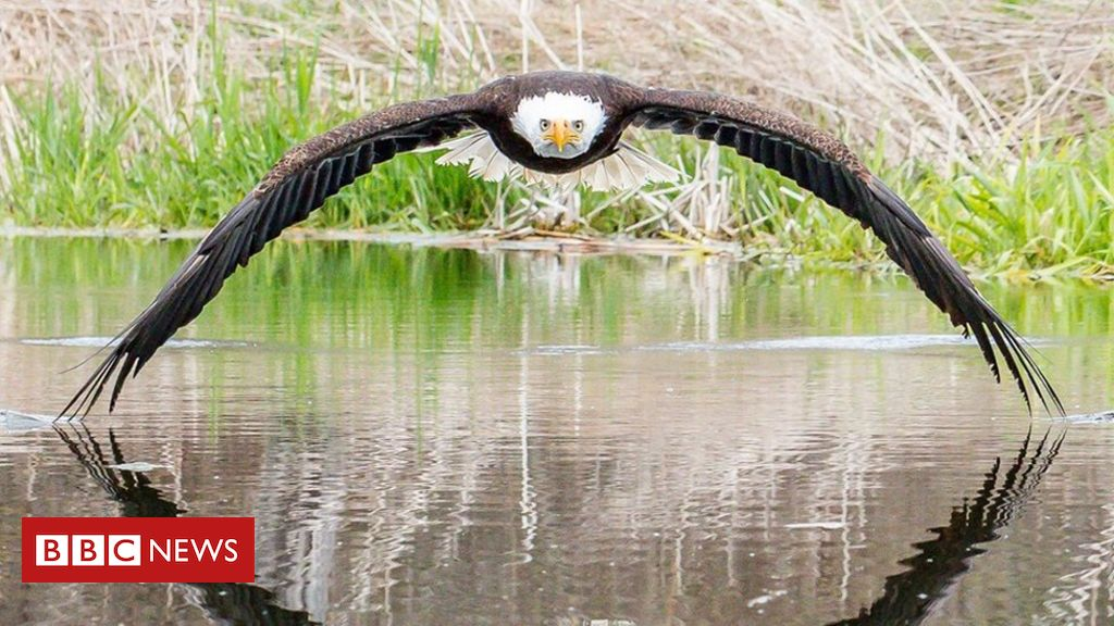 107126199 bruce - Photographer 'overwhelmed' by response to bald eagle picture