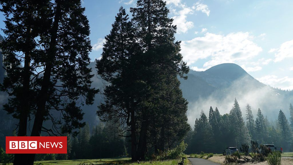 107341427 p07cz88g - What's killing Yosemite's trees?