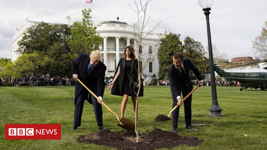 107346237 046374096 2 - Macron to send Trump replacement friendship tree
