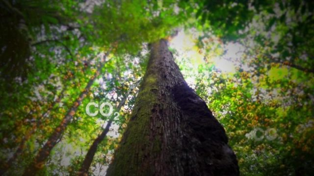 1563579475 704 Amazon deforestation Brazil039s Bolsonaro dismisses data as 039lies039 - Brazil environment minister heckled over Amazon fires