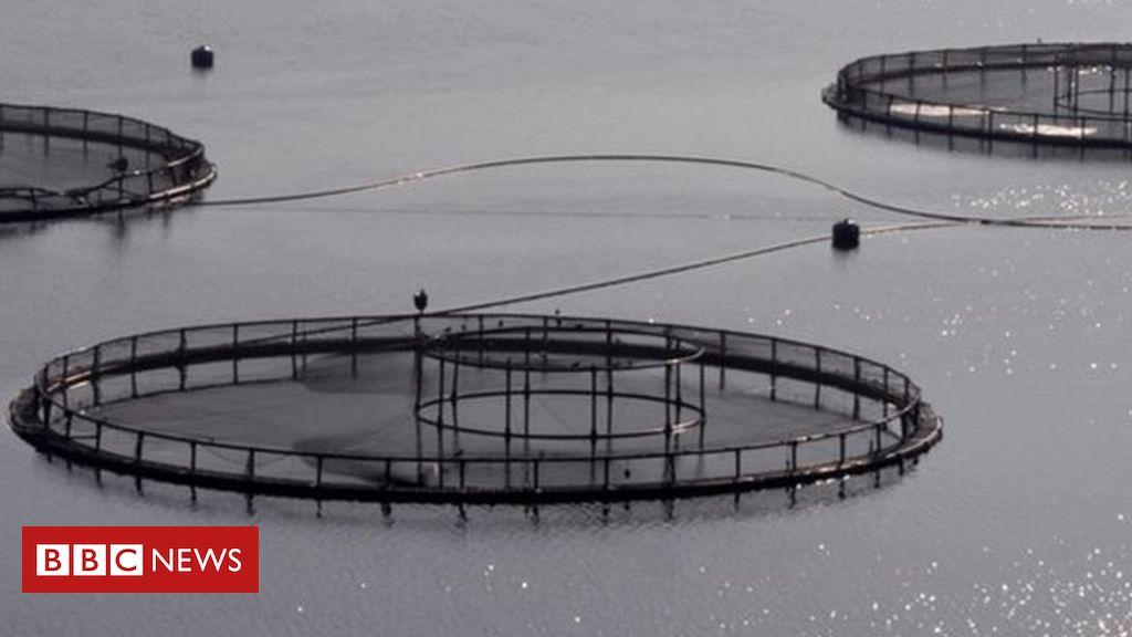 107036141 fishfarms003 - Salmon petition calls for 'emergency' fish farm inspections
