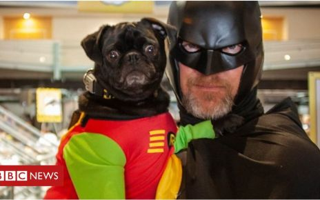107810464 p07gg3mn - Canine capers as dog owners dress up pets