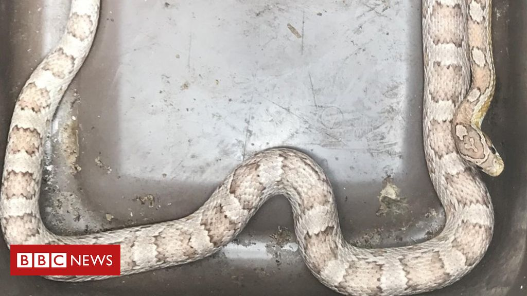 107847844 snake - 'Terrified' woman finds snake in Marlow kitchen drawer