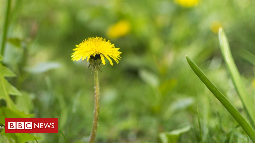107933862 gettyimages 942237546 - Car parts from weeds: The future of green motoring?