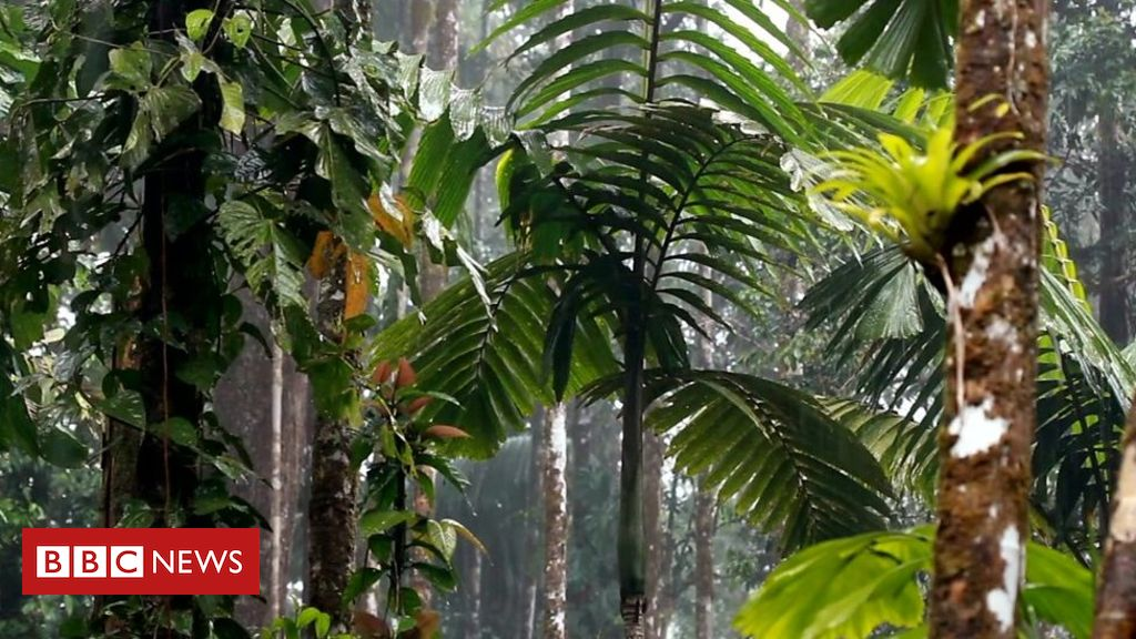 108482204 p07lhx2y - Amazon Fires: Why the rainforest helps fight climate change